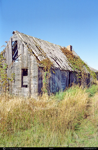 Vine covered abandoned homestead